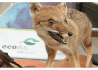 Monitoramento de Fauna Atropelada